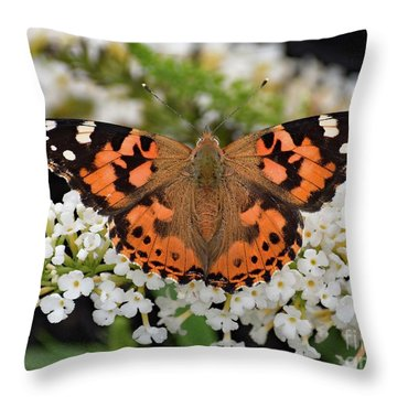 Stunning Painted Lady Throw Pillow