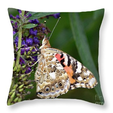 Stunning Pattern - Painted Lady Throw Pillow
