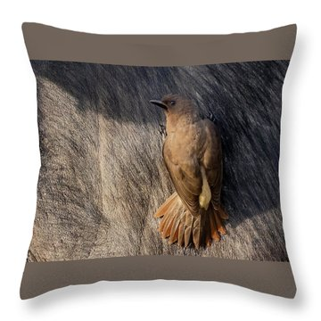 Sub-adult Yellow-billed Oxpecker On Cape Buffalo Throw Pillow