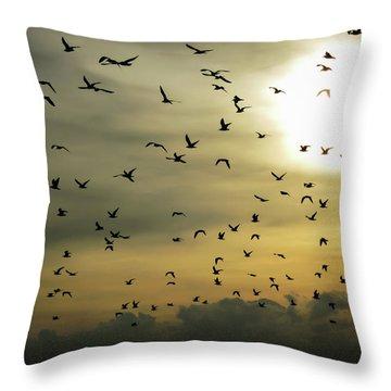 Sun Flock Throw Pillow