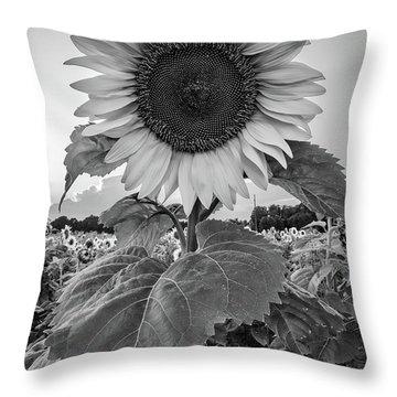 Sunflowers 10 Throw Pillow