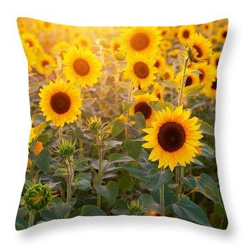 Sunflowers Field Throw Pillow