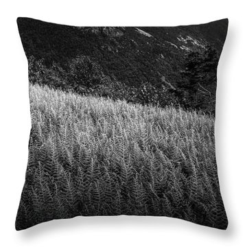 Throw Pillow featuring the photograph Sunlight On Ferns, Mount Willard by Wayne King