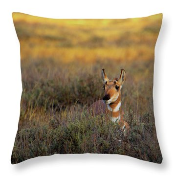 Throw Pillow featuring the photograph Sunset Pronghorn by Pete Federico