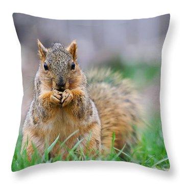 Super Cute Fox Squirrel Throw Pillow