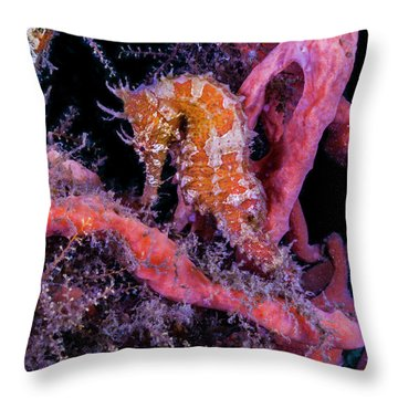 Surrounded Colors Throw Pillow