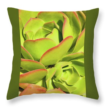 Sweet Succulents I Throw Pillow