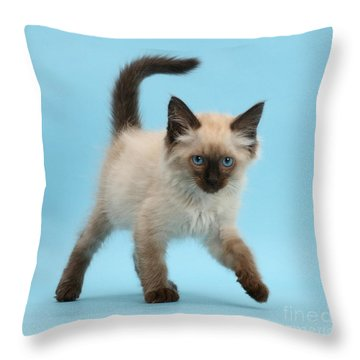Throw Pillow featuring the photograph Swiggerty Swooty by Warren Photographic