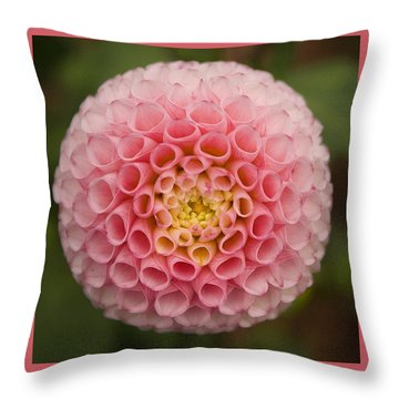 Throw Pillow featuring the photograph Symmetrical Dahlia by Brian Eberly