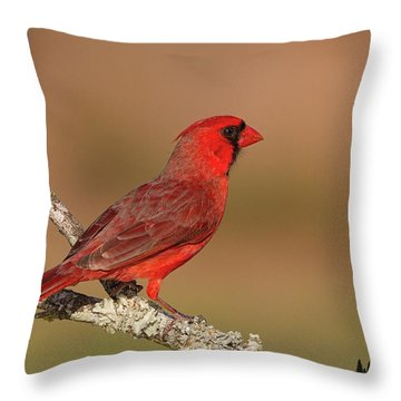 Texas Cardinal Throw Pillow