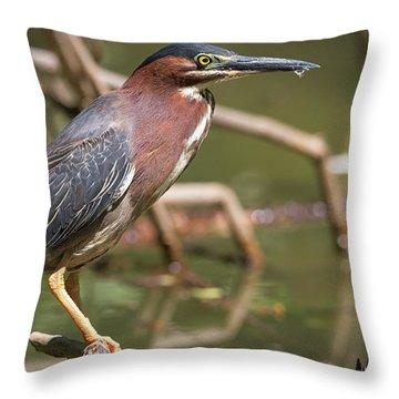 Texas Green Heron Throw Pillow