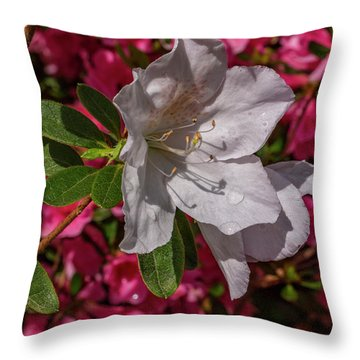 Texture And Contrast Throw Pillow