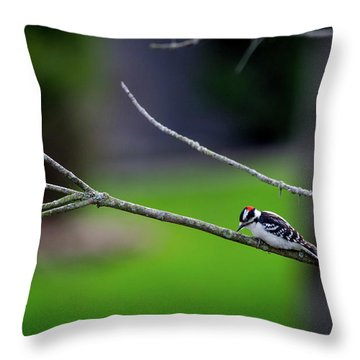 The Downey Woodpecker Throw Pillow