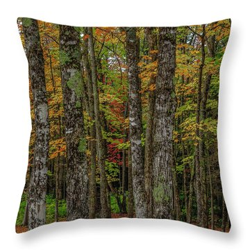 The Fall Woods Throw Pillow
