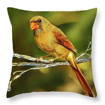 The Female Cardinal Throw Pillow