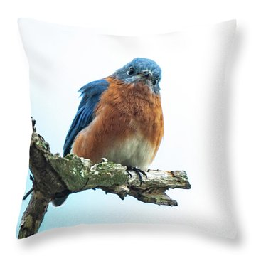 Throw Pillow featuring the photograph The Inquisitive Bluebird by Lara Ellis