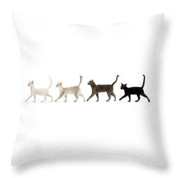 Throw Pillow featuring the photograph The Kits Parade - Four by Warren Photographic