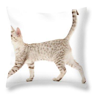The Kits Parade - Three Throw Pillow
