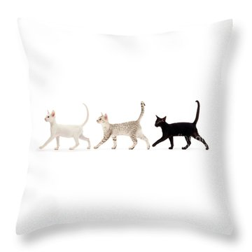 The Kits Parade - Three Throw Pillow