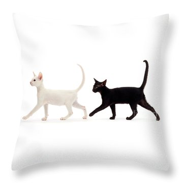 Throw Pillow featuring the photograph The Kits Parade - Two by Warren Photographic