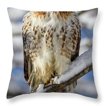 Throw Pillow featuring the photograph The Look, Red Tailed Hawk 1 by Michael Hubley