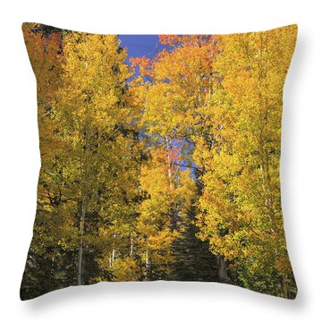 The Road A Little Less Traveled Throw Pillow