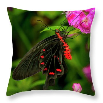 The Semperi Swallowtail Butterfly Throw Pillow