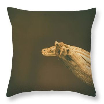 Throw Pillow featuring the photograph The Stare by Dheeraj Mutha