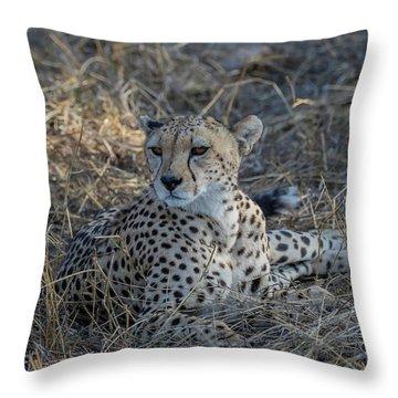 Cheetah In Repose Throw Pillow
