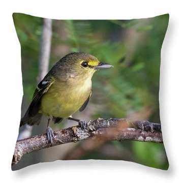 Thick-billed Vireo Throw Pillow