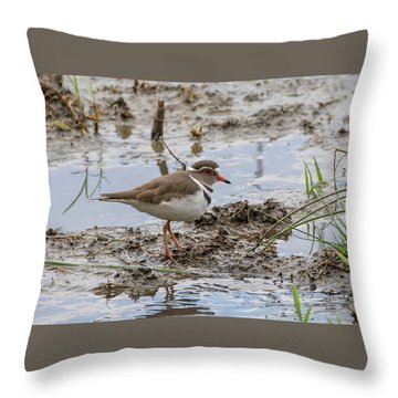 Three-banded Plover Throw Pillow