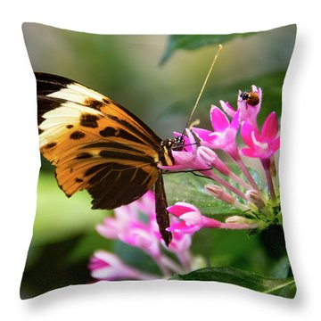 Tiger Longwing Butterfly Drinking Nectar  Throw Pillow