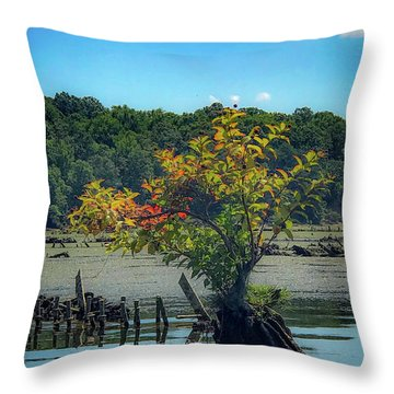 Throw Pillow featuring the photograph Tree In Mallows Bay by Lora J Wilson