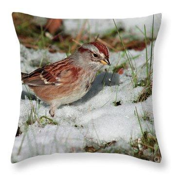 Tree Sparrow In Snow Throw Pillow