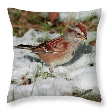 Tree Sparrow In Snow Throw Pillow