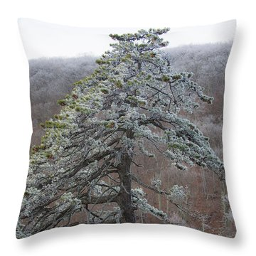 Tree With Hoarfrost Throw Pillow