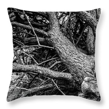 Throw Pillow featuring the photograph Trees, Leaning by Edward Lee