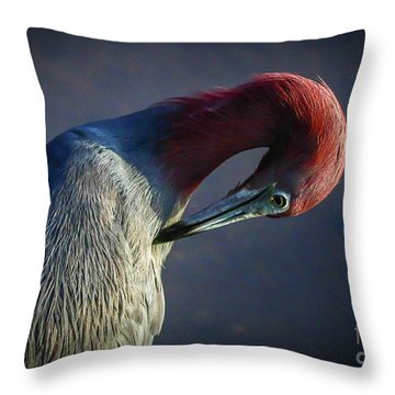 Tricolor Preening Throw Pillow