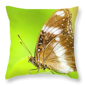 Tropical Exotics Throw Pillow