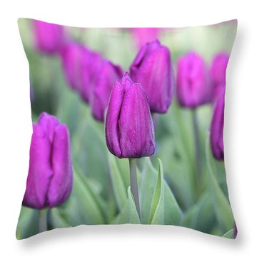 Throw Pillow featuring the photograph Tulipa Purple Prince  by Tim Gainey