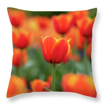 Throw Pillow featuring the photograph Tulipa Worlds Favourite Flowers  by Tim Gainey