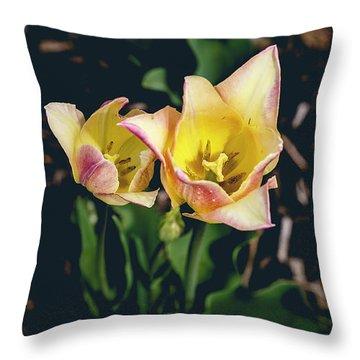Tulips At Hershey Gardens Throw Pillow