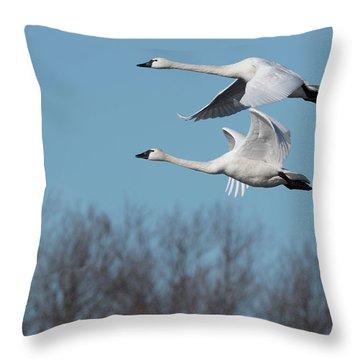 Tundra Swan Duo Throw Pillow