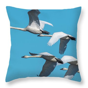 Tundra Swans In Flight Throw Pillow
