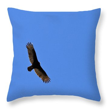 Turkey Vulture Soaring Throw Pillow
