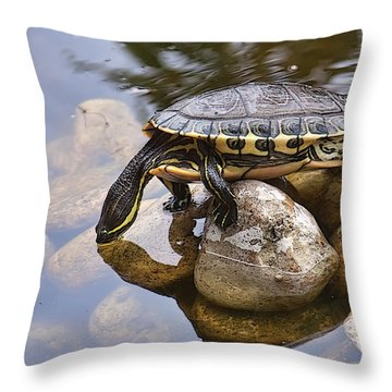 Turtle Drinking Water Throw Pillow
