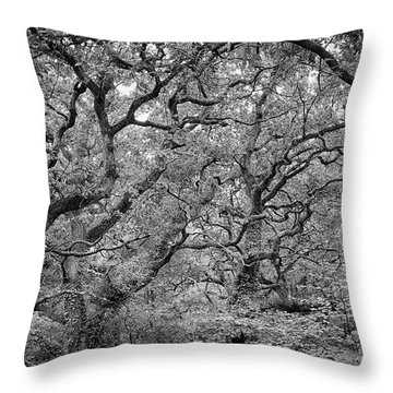 Throw Pillow featuring the photograph Twisted Forest by Nathan Bush