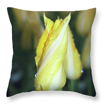 Twisted Yellow Tulip Throw Pillow