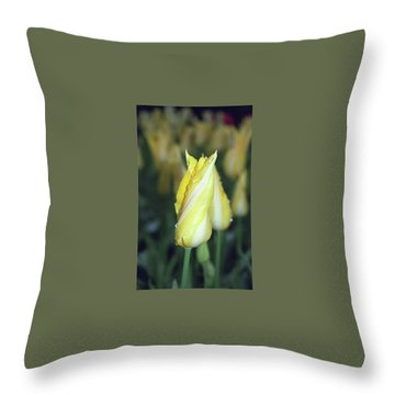 Twisted Yellow Tulip Throw Pillow