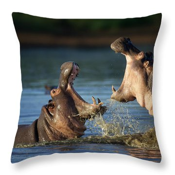 Hippopotamus Amphibius Throw Pillows